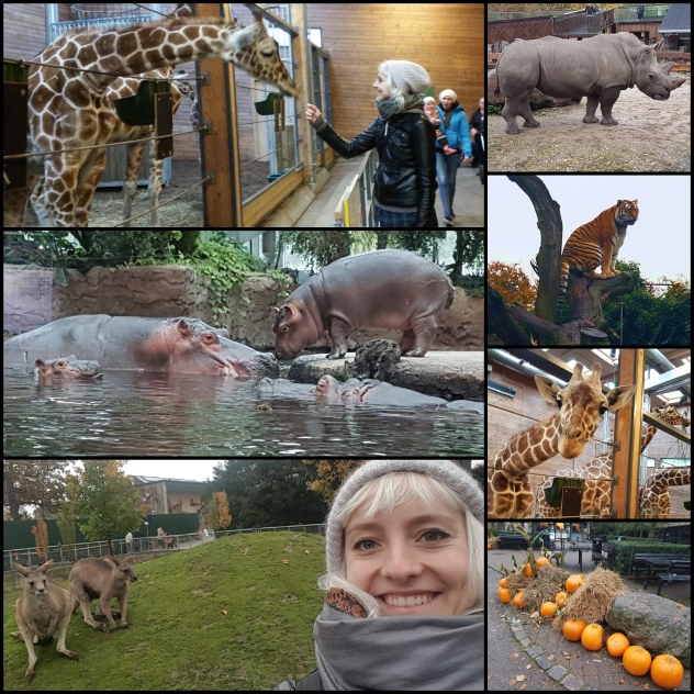 Zoo-collage